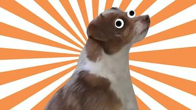 Derpy Doggo